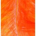 Marabufedern orange