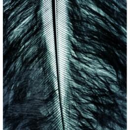 Marabufedern schwarz