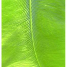 Marabufedern hellgrün