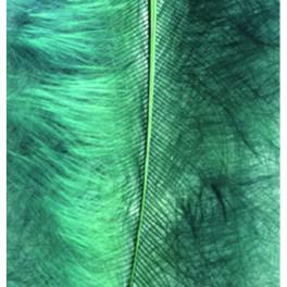 Marabufedern grün