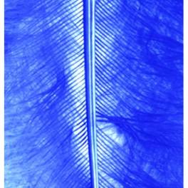 Marabufedern blau
