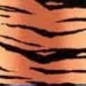 Color-Dekor 180° Tiger